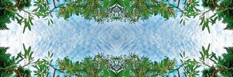 Крошечные облака и зеленое небо дерева березы листвы и голубых в тропическом лесе на текстуре предпосылки природы рамки Стоковое Изображение RF