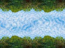 Крошечные облака и зеленое небо дерева березы листвы и голубых в тропическом лесе на текстуре предпосылки природы рамки Стоковая Фотография