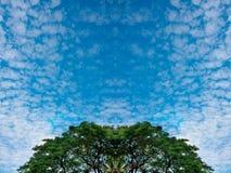 Крошечные облака и сочный зеленый лес дерева березы листвы и голубых неба весной на перспективе текстуры предпосылки природы рамк Стоковые Фотографии RF