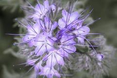 Крошечные полевые цветки Стоковое Фото