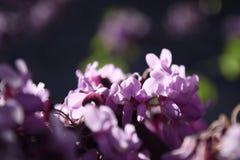 Крошечные цветки на ветви дерева весной стоковое фото rf