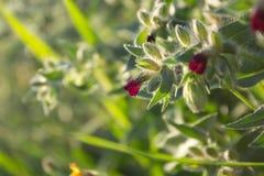 Крошечные цветки поля, wildflowers, луг стоковые фотографии rf