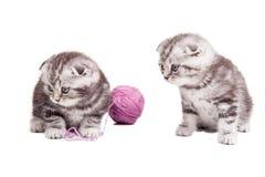 Крошечные cuties Стоковое Изображение RF