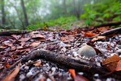 Крошечный гриб на тропе Стоковая Фотография RF