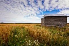 Крошечный дом амбара на полях овса Стоковое фото RF