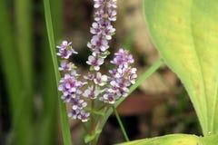 Крошечный и изумительный цветок записанный в оставаться тропического леса Стоковое Изображение RF