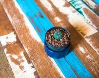 Крошечный кактус в голубой вазе которая положила дальше деревянную таблицу Стоковое Изображение RF