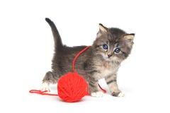 Крошечный котенок играя с красным шариком пряжи Стоковые Изображения RF