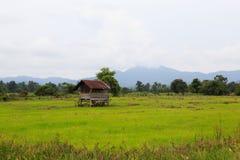 Крошечный дом в рисовых полях Стоковые Фото