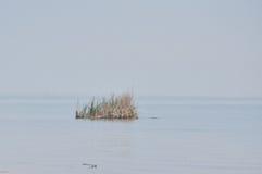 Крошечный остров травы на Великих озерах, принятых в Rochester Стоковое Фото
