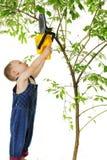 Крошечный триммер дерева Стоковая Фотография