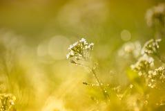Крошечный цветок весны и роса утра стоковая фотография