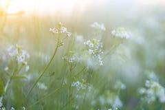 Крошечный цветок весны и роса утра стоковые фото