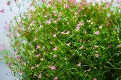 Крошечный цветок Стоковое Изображение