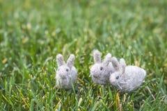 3 крошечных кролика или зайчики серых белизны пушистых на зеленой траве Стоковая Фотография