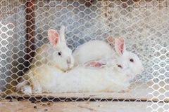3 кролика в клетке Стоковые Изображения RF