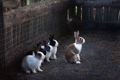 Кролики в там paddock Стоковое фото RF