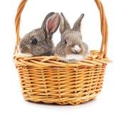 кролики 2 корзины Стоковое Изображение