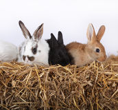 кролики малые Стоковые Фото