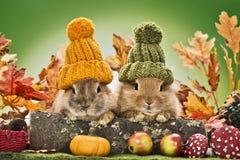 Кролики младенца Стоковое Изображение RF