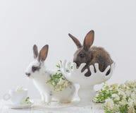 Кролики на белой предпосылке стоковое изображение
