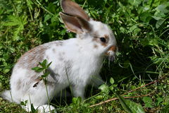 Кролики на луге Стоковое Изображение RF