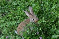 Кролики на луге Стоковое фото RF