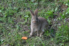 Кролики на луге Стоковые Фото