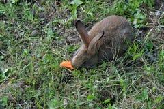 Кролики на луге Стоковая Фотография RF