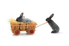 кролики 2 Стоковые Изображения RF
