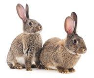 кролики 2 Стоковые Фото