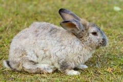 Кролик в зеленой траве Стоковое Изображение RF