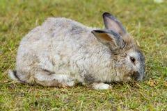 Кролик в зеленой траве Стоковое Изображение