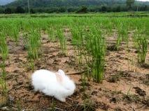Кролик в ниве Стоковое фото RF