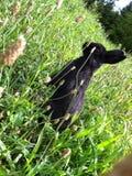 Кролик в природе Стоковые Изображения