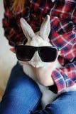 Кролик в солнечных очках стоковое фото rf