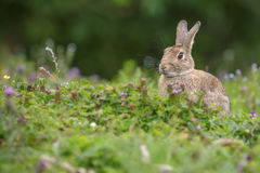 Кролик в лужке Стоковое Фото