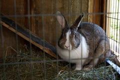 Кролик в hutch Стоковое Изображение
