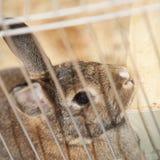 Кролик зайчика в клетке Стоковое Фото