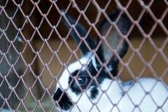 Кролик зайчика в клетке Стоковые Изображения RF