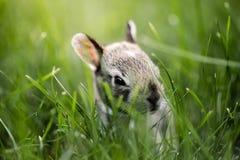 Кролик зайчика младенца в траве Стоковые Изображения RF