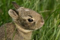 Кролик зайчика младенца в траве Стоковые Фото