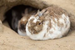 Кролик зайчика на траве конец вверх Стоковые Фото