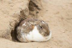Кролик зайчика на траве конец вверх Стоковое фото RF