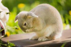 Кролик зайчика на траве конец вверх Стоковая Фотография RF