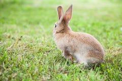 Кролик зайчика на траве Стоковое фото RF