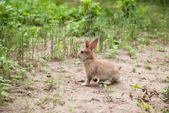 Кролик зайчика на траве Стоковое Изображение RF