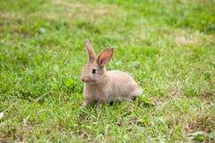Кролик зайчика на траве Стоковое Изображение