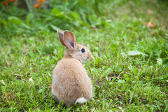 Кролик зайчика на траве Стоковые Изображения RF