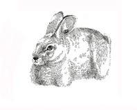 Кролик зайчика пасхи чернил графический Стоковые Фото